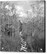 The Florida Trail Acrylic Print