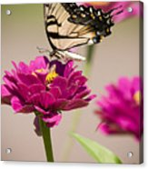The Flower And Butterfly Acrylic Print