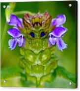 The Flower King Acrylic Print