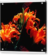 The Flower Of Fire Acrylic Print