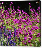 The Flowers And The Bees Acrylic Print