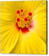 The Flowers Eyes-debbie-may Acrylic Print