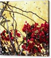 The Flowers Of Carmel 2 Acrylic Print