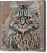 The Fluffy Feline Acrylic Print by Terry Kirkland Cook