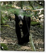 The Forest Bear Acrylic Print