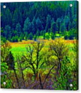 The Forest Echoes With Laughter 2 Acrylic Print