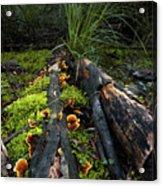 The Forest Floor Acrylic Print