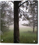 The Forest In The Mist Acrylic Print