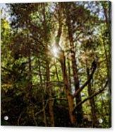 The Forest Sun Acrylic Print