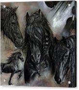 The Friesians In My Head Acrylic Print by Caroline Collinson