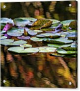 The Frog And The Lilipads Acrylic Print