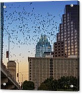 The Frost Bank Tower Stands Guard As 1.5 Million Mexican Free-tail Bats Overtake The Austin Skyline As They Exit The Congress Avenue Bridge Acrylic Print