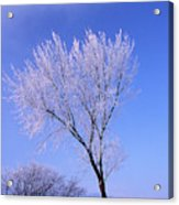 The Frost Like Ashes Acrylic Print
