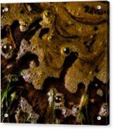 The Frothy Veil Acrylic Print