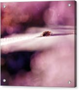 The Galaxy Acrylic Print
