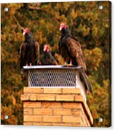 The Gathering Of Vultures Acrylic Print