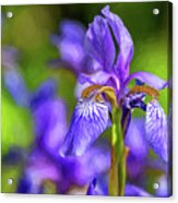 The Gentleness Of Spring 4 - Paint Acrylic Print