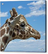 The Giraffe Acrylic Print