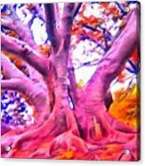The Giving Tree 3 Acrylic Print