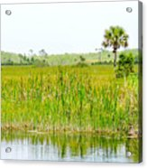 The Glades Acrylic Print