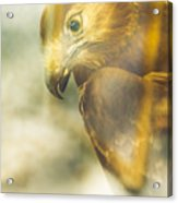 The Glass Case Eagle Acrylic Print