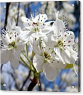 The Glory Of Spring Acrylic Print