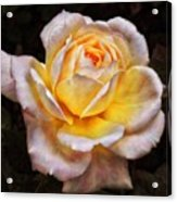 The Glowing Rose Acrylic Print