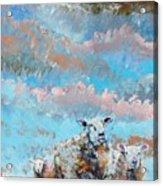 The Golden Flock - Colorful Sheep Art Acrylic Print