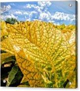 The Golden Leaf Acrylic Print