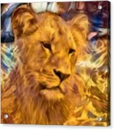 The Golden Lioness  Acrylic Print