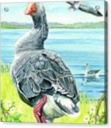 The Goose  Acrylic Print
