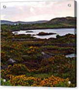 The Gorse It Was Abloomin Acrylic Print