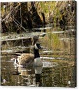 The Graceful Goose Acrylic Print