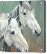 The Grays - Horses Acrylic Print