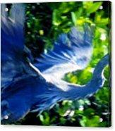 The Great Blue Acrylic Print
