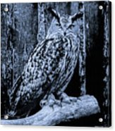 Majestic Great Horned Owl Bw Acrylic Print