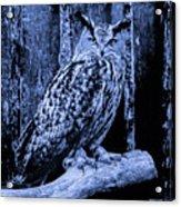 Majestic Great Horned Owl Blue Indigo Acrylic Print