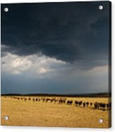The Great Migration Acrylic Print