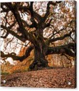 The Great Oak Acrylic Print