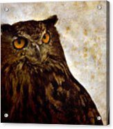 The Great Owl Acrylic Print