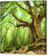 The Great Tree Acrylic Print