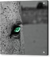 The Green Eyed Horse Acrylic Print