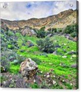 The Greening Of The Las Llajas Trail  Acrylic Print