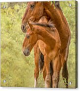 The Guardian Acrylic Print