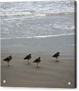 The Gulf In Shades Of Gray - Do Re Mi And Fa Acrylic Print