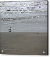 The Gulf In Shades Of Gray - Seaing Acrylic Print