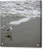 The Gulf In Shades Of Gray - Strutting Acrylic Print