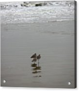 The Gulf In Shades Of Gray - Three Sleepy Heads Acrylic Print