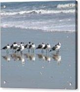 The Gull Gang Acrylic Print