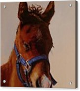The Halter Acrylic Print